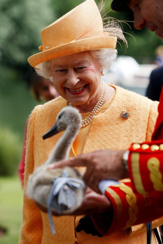 rainha cisnes
