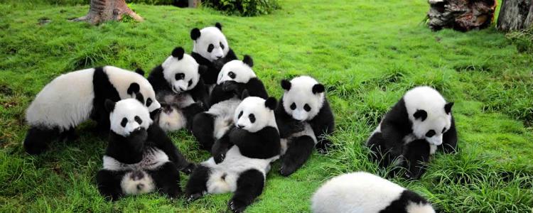 pontos-turisticos-da-china pandas