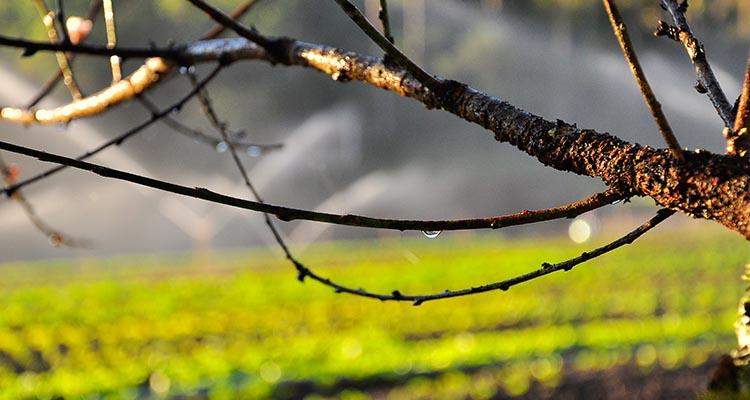 foto-4-antonio-machado