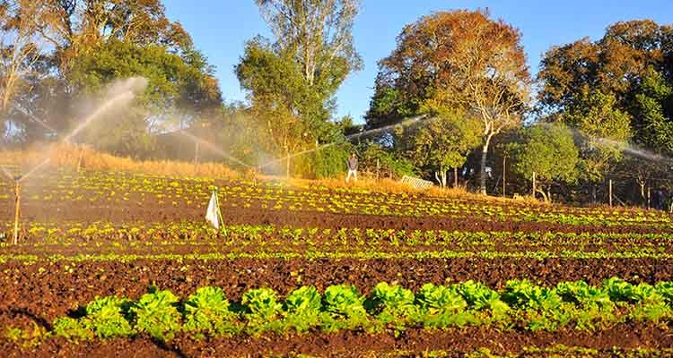 wwoof-chacara-marfil-agroeconoligos 4