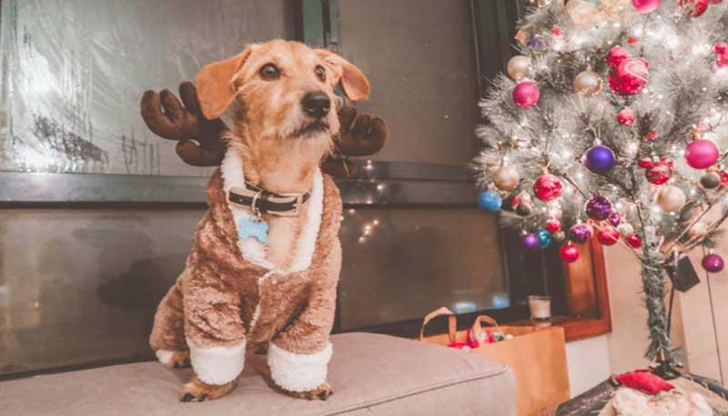 Fred no Natal