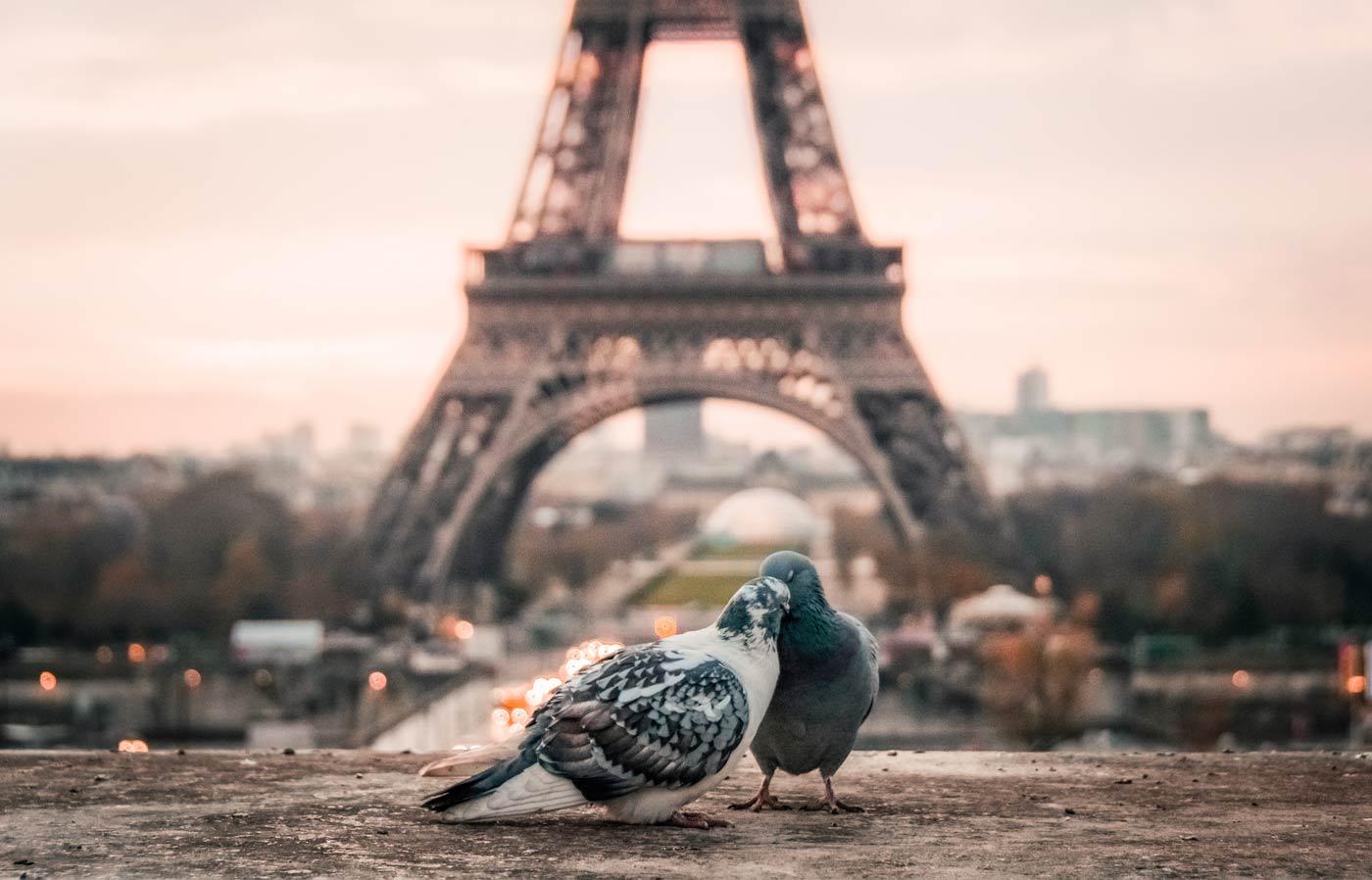 pombos em paris