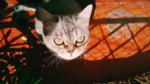 Viajar com gatos: a experiência
