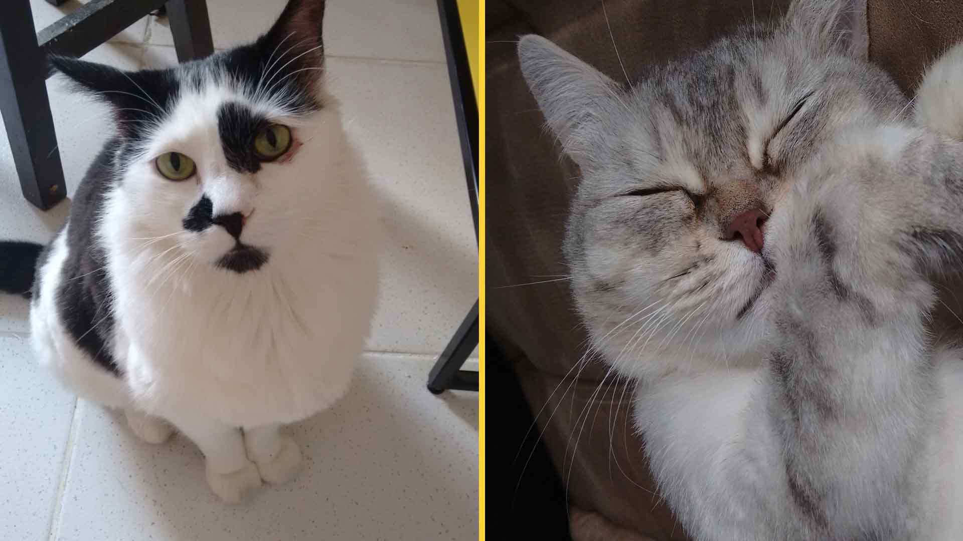 Vince e Mia, os felinos de Lígia